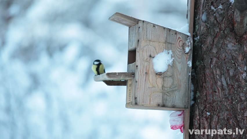 Putnu būrītis ziemā
