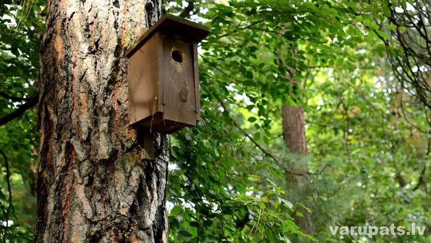 Putnu būrītis mežā