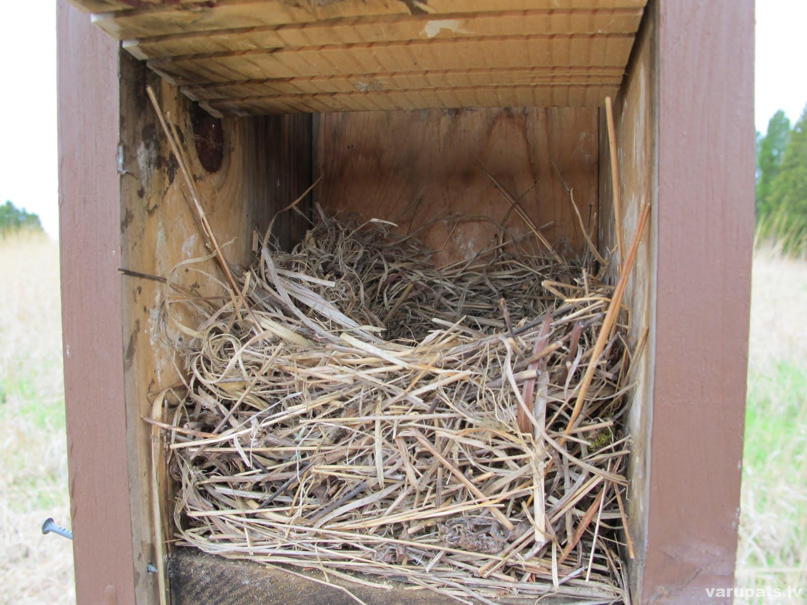 Putna ligzda putnu būrītī